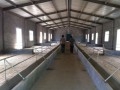 羊舍每平米建设费用、成本分析