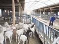 推荐:国家5个畜牧养殖业养羊补贴政策