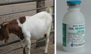 羊快疫疫苗
