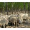 生产供应养殖防护网 养殖露粪用铁丝网 钢丝网 质优价廉