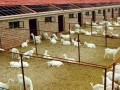 养羊新手必看:建设合法养羊场必走的六大流程