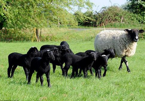 动物 羚羊 牛 485_339