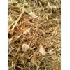 大量供应豆秸草粉