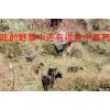 重庆市丰都县双龙镇羊养殖场