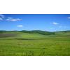 吉林省内蒙古草原羊,养羊合作社,养羊基地,养羊场