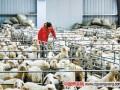 河南洛宁县东宋镇:养殖脱贫羊 共同奔富路