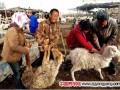 """新疆兵团南部团场为贫困户赠送""""扶贫羊"""""""