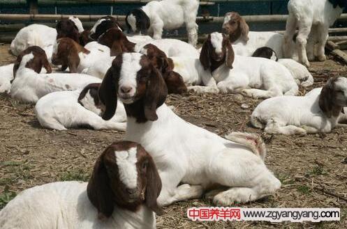 乐虎国际娱乐官网lehu18养殖
