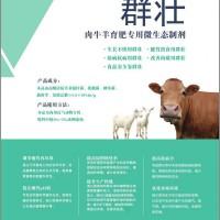 肉牛羊育肥专用益生菌添加剂