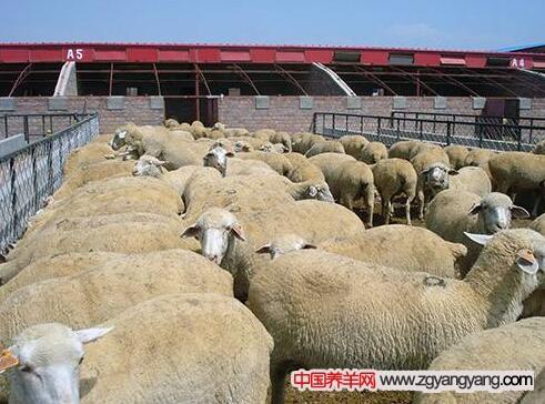 巴美羊断尾、场地管理的方法