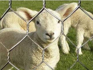圈羊六角网