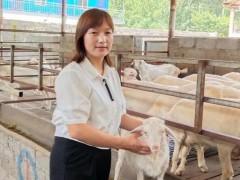 """河南省出彩巧媳妇陈静晓:菊花坡上""""领头羊"""""""