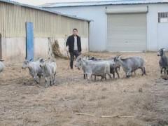 """菏泽市单县:""""牧羊人""""朱西坤的幸福致富路"""
