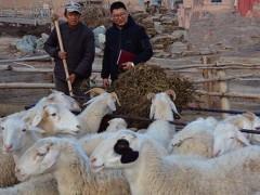 科学养羊,现代农民喂羊的理念