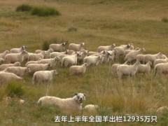 羊肉涨价30%!多养猪能解决的肉价问题,为啥对羊肉不适用?