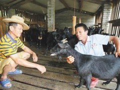 农民养种羊实现高产、高收,与这些管理措施密不可分